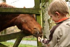 Weinig jongen en paard Stock Foto