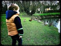 Weinig jongen het letten op eenden door een eendvijver Stock Afbeeldingen