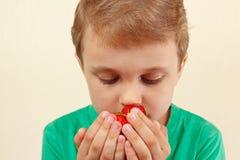Weinig jongen het snuiven aroma van verse rijpe aardbeien Royalty-vrije Stock Foto