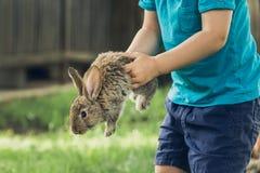 Weinig jongen houdt een konijntje bij het landbouwbedrijf stock afbeeldingen