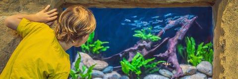 Weinig jongen, jong geitje die op de ondiepte van vissen letten die in oceanarium, kinderen zwemmen die van het onderwaterleven i royalty-vrije stock afbeeldingen