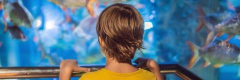 Weinig jongen, jong geitje die op de ondiepte van vissen letten die in oceanarium, kinderen zwemmen die van het onderwaterleven i royalty-vrije stock afbeelding