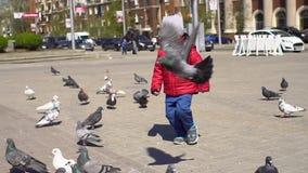 Weinig jongen loopt dichtbij de troepen van duiven stock videobeelden