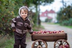 Weinig jongen, met een karretjehoogtepunt van appelen Stock Afbeelding