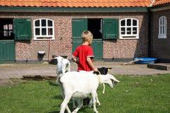 Weinig jongen met geiten stock afbeelding