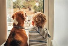 Weinig jongen met het beste vriend kijken door venster Stock Afbeelding