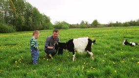 Weinig jongen met papa die de geit op een weide voeden stock videobeelden