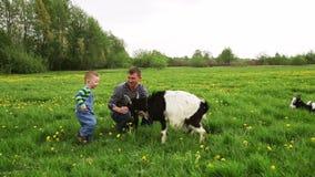 Weinig jongen met papa die de geit op een weide voeden stock footage