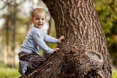 Weinig jongen op de boom Stock Afbeelding