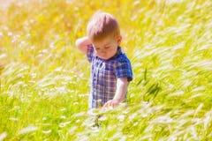 Weinig jongen op de zomergebied Royalty-vrije Stock Foto