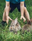 Weinig jongen probeert om een konijn te vangen stock fotografie