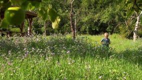 Weinig jongen van het blondehaar loopt door het de tuinvoetpad van de de zomerappel en verzamelt de installaties stock videobeelden