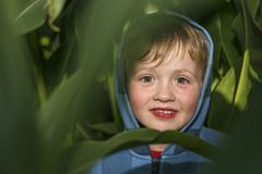 Weinig jongen verbergt op het graangebied royalty-vrije stock foto