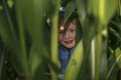 Weinig jongen verbergt op het graangebied stock afbeeldingen