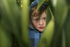 Weinig jongen verbergt op het graangebied stock foto's