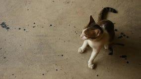 Weinig Kat stock videobeelden