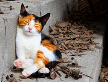 Weinig kat Stock Foto