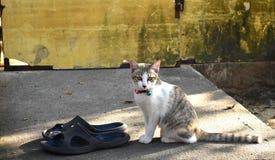 Weinig Kat royalty-vrije stock foto