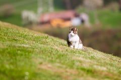 Weinig kat die in het gras wacht Stock Foto
