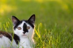 Weinig kat in groen Stock Foto's