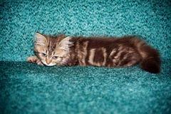Weinig kat het spelen op het bed Stock Fotografie
