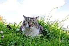 Weinig kat met grappige eigenaardige meningen Stock Foto's