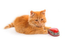 Weinig kat met muis stock foto's