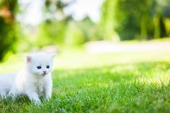 Weinig kat, openlucht Royalty-vrije Stock Afbeelding