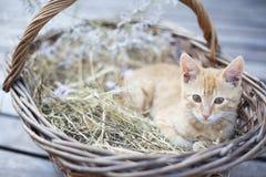 Weinig kat in rieten mand Stock Foto's