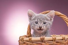 Weinig katje in de mand Stock Foto's