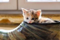 Weinig katje in de Schoen royalty-vrije stock foto