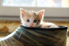 Weinig katje in de Schoen royalty-vrije stock afbeelding