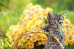 Weinig katje in de tuin stock foto's