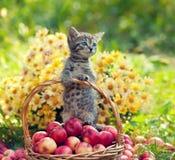 Weinig katje in een mand stock fotografie