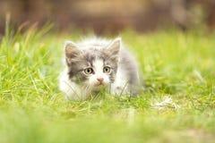 Weinig katje het spelen in het gras Royalty-vrije Stock Foto