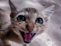 Weinig katje klaar om de wereld te beslissen royalty-vrije stock foto