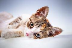 Weinig katje met grote ogen Royalty-vrije Stock Foto