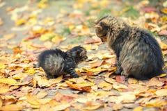 Weinig katje met moederkat in een tuin royalty-vrije stock fotografie