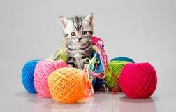 Weinig katje met velen multi-coloured clew Royalty-vrije Stock Foto's