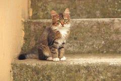 Weinig katje op concrete treden Stock Afbeeldingen