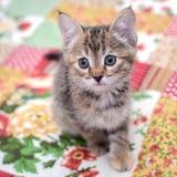 Weinig katje op een kleurrijke deken royalty-vrije stock afbeeldingen