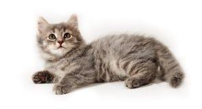 Weinig katje op wit Stock Afbeeldingen