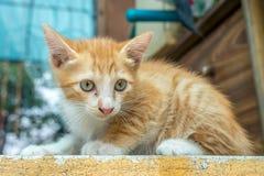 Weinig katje zit op openluchtgang royalty-vrije stock afbeeldingen