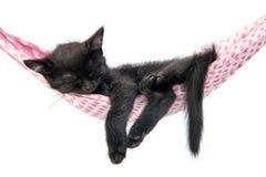 Weinig katjesslaap op een sprei Kleine kattenslaap zoet zoals stock afbeelding