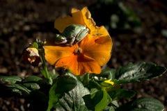Weinig kikker op bloem Stock Afbeeldingen
