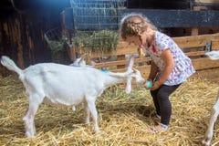 Weinig kind voedt een geit met melk van een fles stock foto's