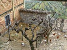 Weinig kippen en haan in werf van een dorpshuis op paddock Italië Stock Fotografie