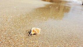 Weinig kluizenaarkrab met mooie shell die op zandstrand aan overzees kruipen stock videobeelden