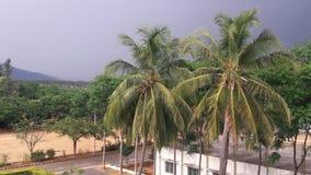 Weinig kokospalm dichtbij door universiteits eerste blok royalty-vrije stock afbeeldingen