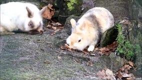 Weinig konijn buiten, konijntje, Pasen stock video